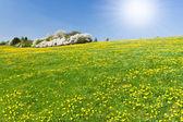 Spring meadow — Стоковое фото