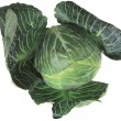 Royalty-Free Stock Photo: Cabbage