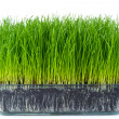 Grass with soil — Stock Photo #5293629