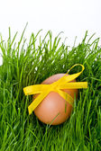 Easter egg and grass — Stock Photo