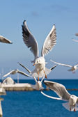 Seagulls at pier — Stock Photo