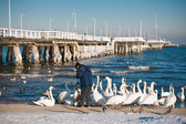 Birds at pier — Stock Photo