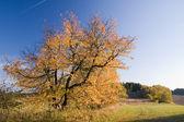 在公园里的多彩秋色 — 图库照片