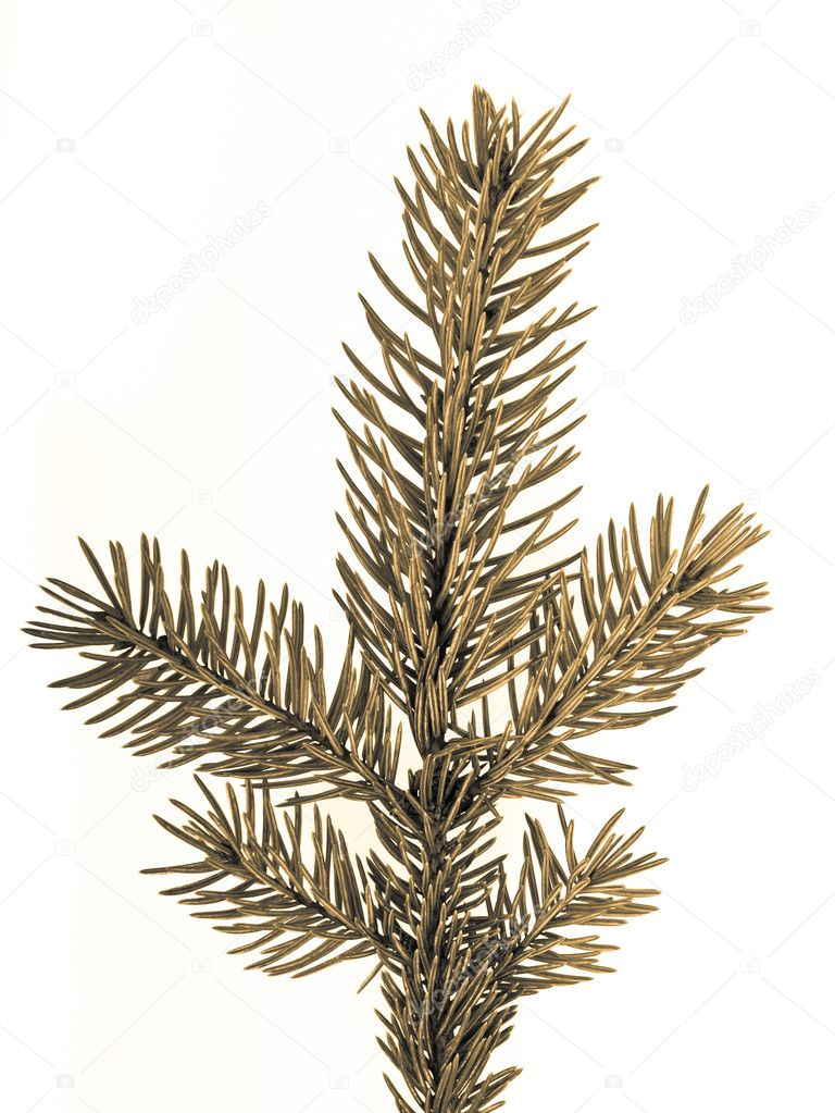 Branch of Christmas tree on white background — Stock Photo #5298284