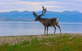 ノルウェーの美しい自然 — ストック写真