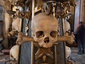 Human skull and bones — Stock Photo