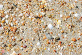 Shell on beach in sand — Stock Photo
