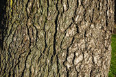 Trunk of tree — Stock Photo
