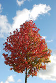 Arbre en couleurs d'automne — Photo