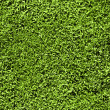 Grass seamless pattern - Stock Photo