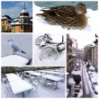 Geneva by winter, Switzerland, collage - Stock Photo