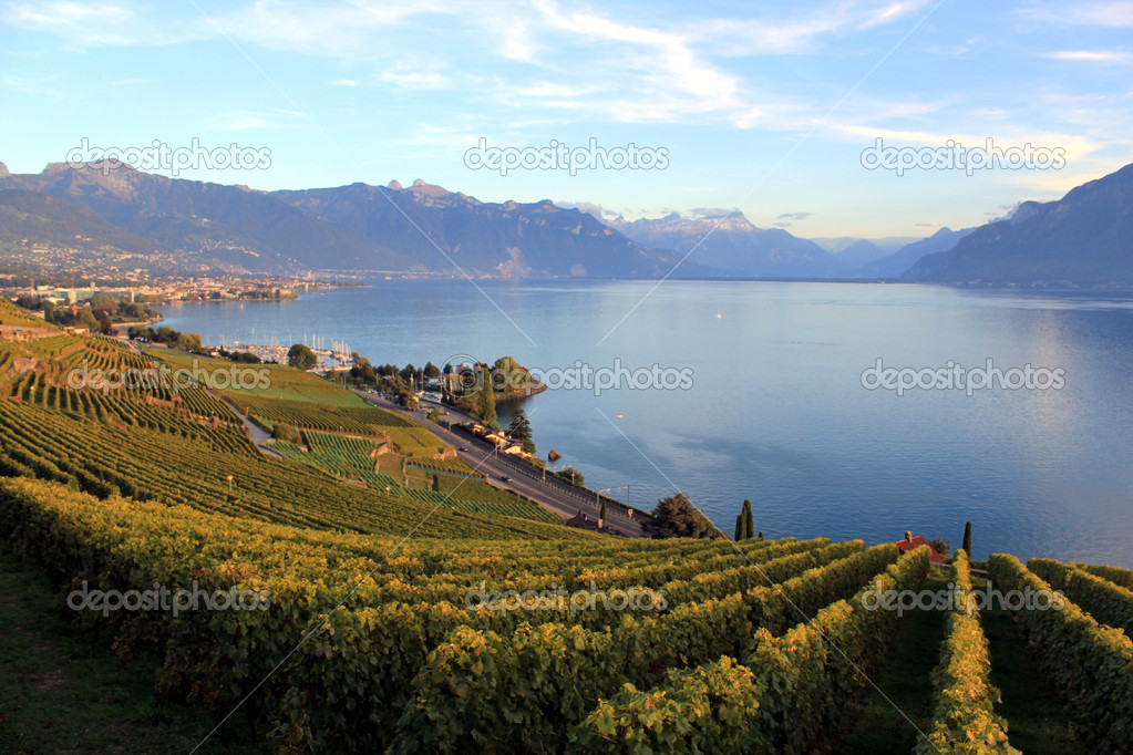 Grandvaux Switzerland  City new picture : Lavaux vineyards, Switzerland — Stock Photo © Elenarts #4135641