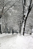 Walkers in Plainpalais place by winter, Geneva, Switzerland — Stock Photo
