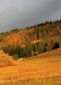 Beautiful landscape by autumnal sunset — Stock Photo