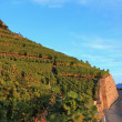 Lavaux vineyards, Switzerland - Stock Photo