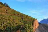 Lavaux vineyards, Switzerland — Stock Photo