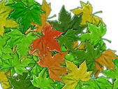 Leaves maple — Stock Photo