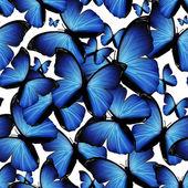 бабочки — Стоковое фото