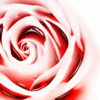 Abstract rose — Stock Photo