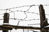 Barbed wire and fence — Stock Photo