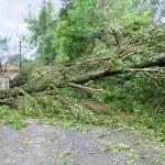 Damaged fallen tree — Stock Photo