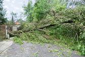 Tronc d'arbre endommagé — Photo