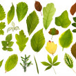 Big collection of different leafs — Stock Photo