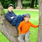 Boys in a Tree — Stock Photo