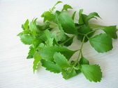 Bunch of sweet herb — Stock Photo