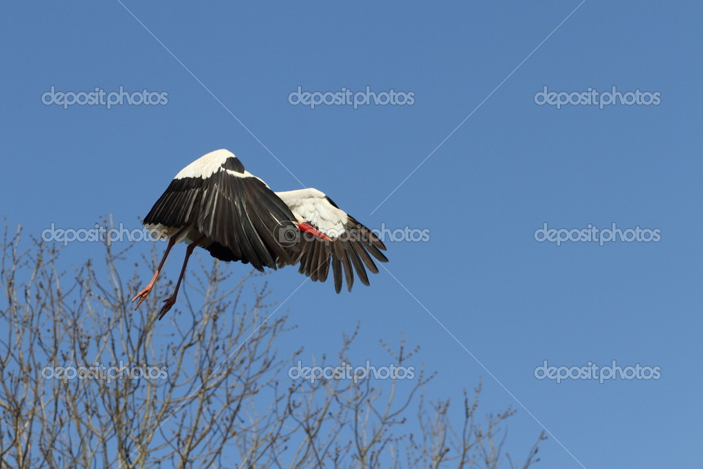 Details of a white stork under a blue sky — Stock Photo #5164565