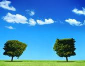Field and two trees — Stock Photo