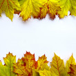 Leaves frame — Stock Photo