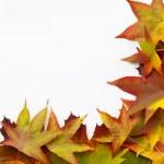 Leaves frame — Stock Photo