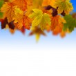Leaves fallen in the sky — Stock Photo