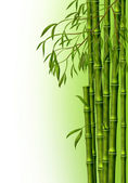 A bamboo grove, the background — Stock Photo