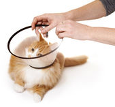Cat with Cone — Stock Photo