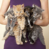 Four Kittens being held by woman — Stock Photo