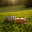 Outdoor Fall Decorations — Stock Photo