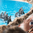 Dolphin show - Foto Stock