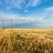 Field and powerlines — Stock Photo