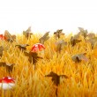 Autumn grass with little mushrooms — Stock Photo #3947107