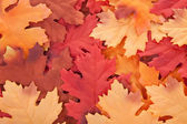 Background of silk autumn leaves — Stock Photo