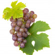 Stock Photo: Cluster of blue grapes