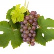Cluster of blue grapes — Stock Photo #4003556