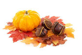 Pumpkin, chestnuts and fake autumn leaves — Stock Photo