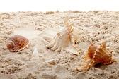 Schelpen op het strand — Stockfoto