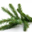 Plastic Bare twig from christmas tree — Stock Photo