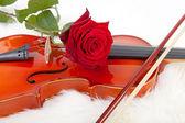 Housle a červené růže — Stock fotografie