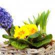 Basket spring flowers — Stock Photo