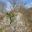 Felsenbaum Rock tree — Stockfoto